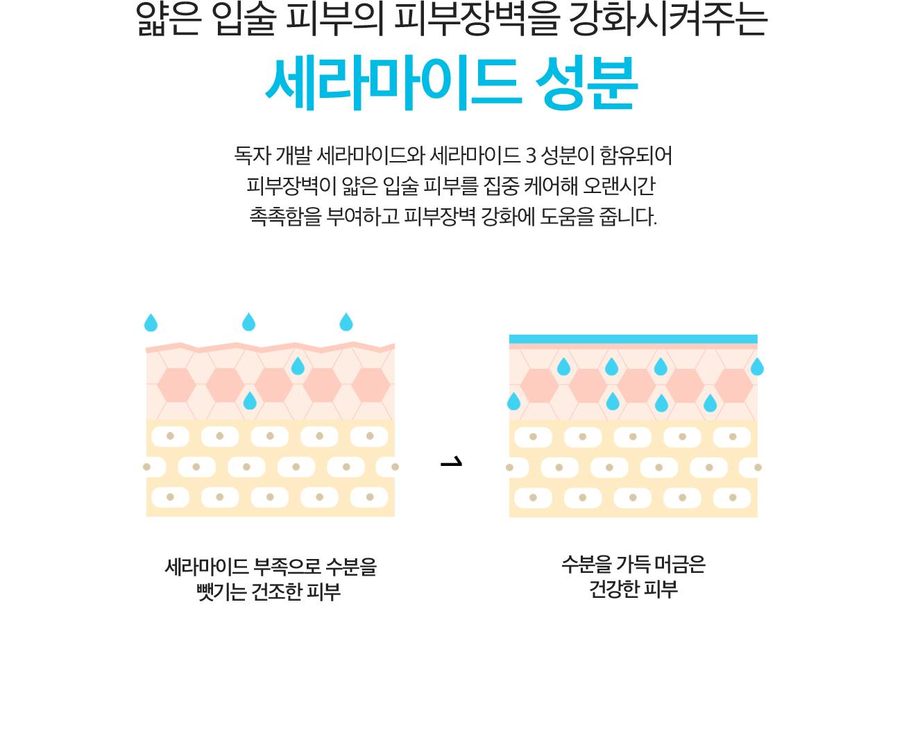얇은 입술 피부의 피부장벽을 강화시켜주는 세라마이드 성분. 독자 개발 세라마이드와 세라마이드 3 성분이 함유되어 피부장벽이 얇은 입술 피부를 집중 케어해 오랜시간 촉촉함을 부여하고 피부장벽 강화에 도움을 줍니다. 세라마이드 부족으로 수분을 뺏기는 건조한 피부 -> 수분을 가득 머금은 건강한 피부